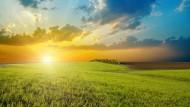 Sonnige Aussichten? Die Solarindustrie kann ebenfalls von der Energiewende profitieren.