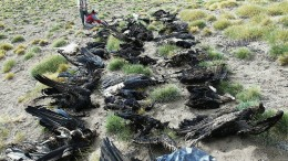 Fatales Massensterben des Andenkondors