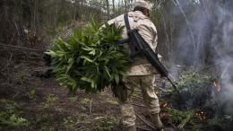 Soldaten brennen Marihuana-Plantage nieder