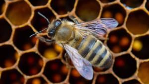 Pestizide töten doch Bienen