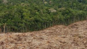 """Weltbank fordert Schritte gegen """"Abholzungs-Mafia"""""""