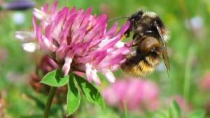 Smart Farming mit Wildbiene