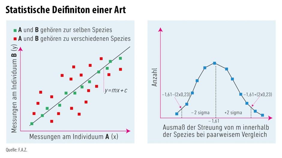 An zwei Fossilien A und B werden möglichst viele Messungen der gleichen Größen vorgenommen und die Messwertpaare in ein Diagramm eingezeichnet (links). Die Steigungen m der Geraden, die in die Punktwolke passen, weisen eine Streuung auf. Deren geeignet quantifiziertes Ausmaß beträgt bei allen Spezies mit der größten Häufigkeit -1,61 (rechts). Liegt es für A und B innerhalb eines bestimmten Intervalls um diesen Wert (hier zwei Sigma oder 2 mal 0,23), gehören sie zur selben Spezies.