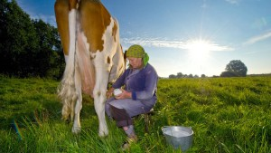 Lidl schlägt Sondersteuer für Milch vor