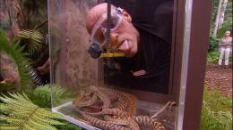 Dschungelcamp lockt mit Ekelprogramm die Werber an