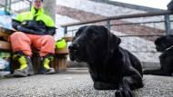 Mit Rettungshunden gegen die Zeit