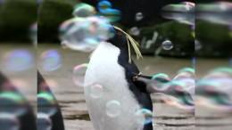 Seifenblasen erfreuen Pinguine