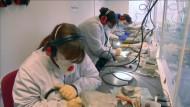 Trainingslager für Hobby-Paläontologen