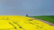 Ade, schwarz-grün-gelbe Landschaft: Die Parteien müssen jetzt wieder zu sich selbst finden.