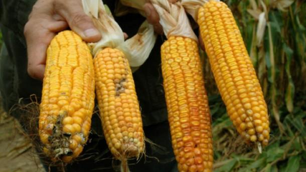 Monsanto-Aktie hoch bewertet im Aufwärtstrend