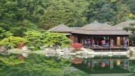 Japan ist eine Reise wert - auch für Frösche.