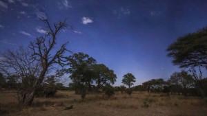Das Nashorn braucht seine Hüter