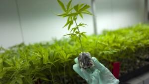 Mildere Strafen in Israel für Konsum von Marihuana