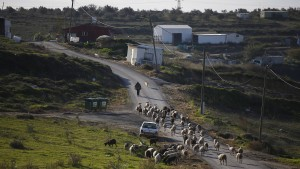 Israel legalisiert Siedlung