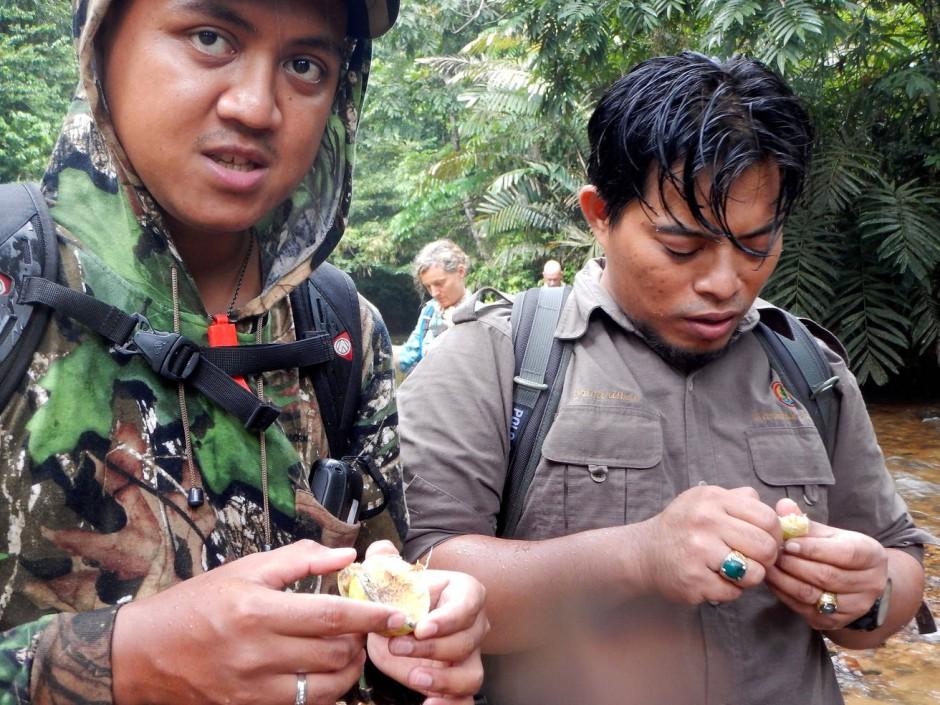 Ohne sie wäre jeder Hobbyforscher rettungslos verloren: indonesische Ranger im Dschungel von Sumatra.