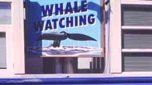 Walbeobachtung am Pazifik