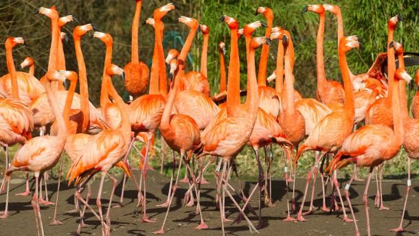 15 Flamingos brutal getötet