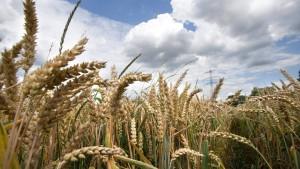 Weniger Bauern, größere Höfe