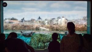 Frankfurter Zoo steht vor weiterem Umbau