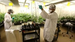 China erlaubt Monsanto-Übernahme - unter Auflagen