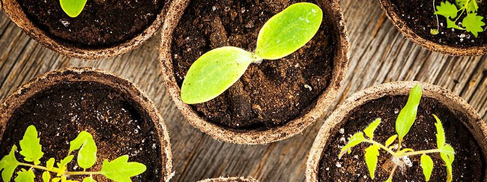 pflanzen selber s en garten eden aus der t te. Black Bedroom Furniture Sets. Home Design Ideas