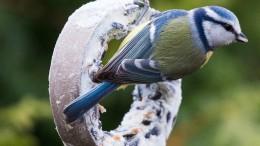 Vogelhäuschen selbst gemacht