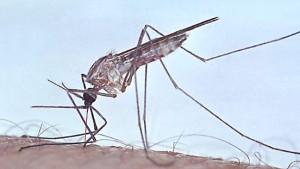 Hoffnung im Kampf gegen Malaria
